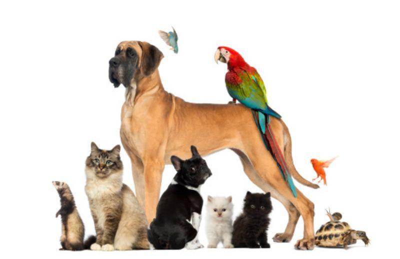 pets-animals